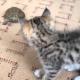 Котенок впервые видит черепаху. Его реакция невероятная!