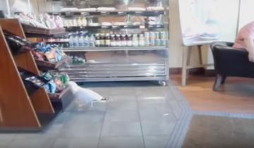 Чайка зашла в кафе и украла пачку чипсов