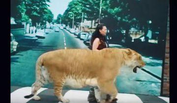 5 самых необычных животных