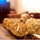 Собака не хочет слезать с дивана
