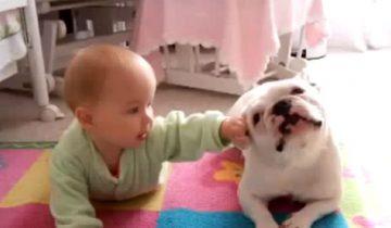 Как собака учила ползать малыша