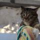 Кот приходит домой необычным способом!