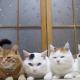 Кошки жуют листья