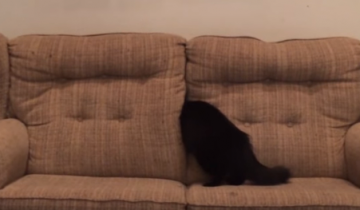 Доказательства того, что кошки – инопланетяне