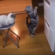 Кошка просит хозяина открыть холодильник. Но то, как она это делает, умиляет!