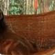 Счастливый ленивец радуется жизни