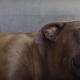 Бойцовского пса впервые приласкали. Его реакция невероятна!