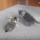 Щенок против котенка. Эти малыши продолжают дело свои предков
