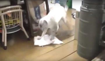 Кошка моет полы. Это невероятно!