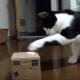 Кот играет с копилкой