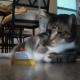 Кот у себя в доме, как в ресторане
