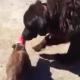 Собака помогает коту освободиться из стакана-ловушки