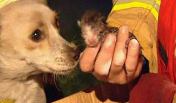 Собака вытащила котят из огня