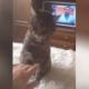 Кошка четко дала понять, что не желает, чтобы ее гладили