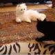 Этой милой кошке показали робокота. Ее реакцию нужно видеть!