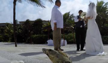 Игуана явилась на свадьбу. Зачем она это сделала?