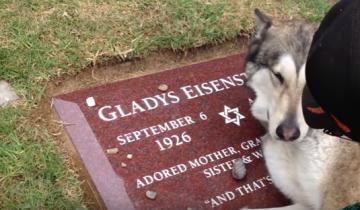 Почему же рыдает собака на могиле бабушки своей хозяйки?