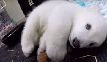 Маленькой белой медведице выбрали имя