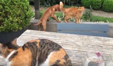 Кот заступился за своего друга, вы не поверите за какого!
