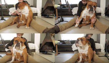 Сначала он начал бить своего бульдога, но затем произошло невероятное!