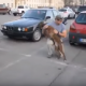 Встреча собаки с хозяином