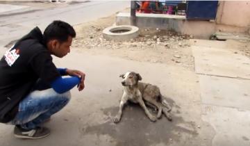 Эту собаку выбросили в канализационную яму, и она застряла в водосточной трубе