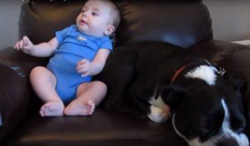 Ребенок какает в кресле. Реакция собаки неподражаема!