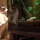 Как живется коту без передних лап?