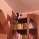 Кот-скалолаз покоряет вершины в квартире!