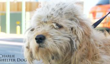 Эту бедную собаку должны были усыпить, но ей повезло…