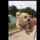 Щенок бежит по воздуху