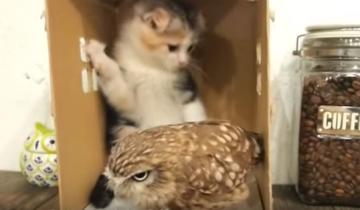 Кошка и сова – лучшие друзья!