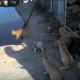 Добро пожаловать на кошачий остров!