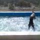 Пес устроил настоящий шторм в бассейне