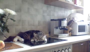 Кот разлегся на кухонной плите и прогоняет свою хозяйку
