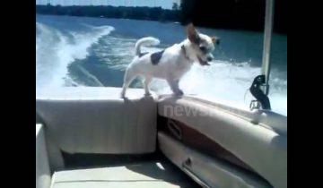 Когда собачка выпала из лодки, у меня чуть не остановилось сердце!