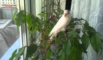 Она скучала по своему попугаю и решила ему позвонить. Это невероятно!