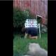 Мальчик пытается собрать всех кошек вместе, но они разбегаются