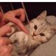 Пластилиновый кот