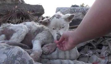 Когда эту собаку достали из мусора, казалось, что она не выживет!