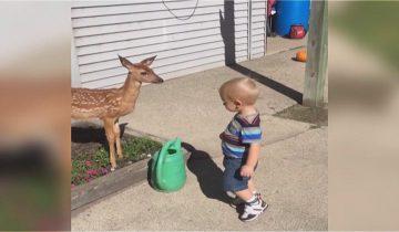 Малыш завел себе необычного друга