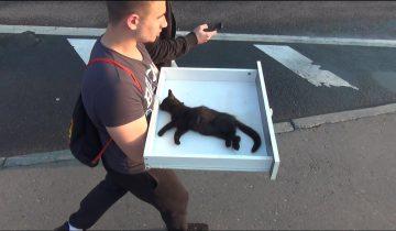 Этот котенок уже умирал. Счет жизни шел на секунды!