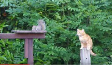 Кот охотится на белку. Чем это закончится?