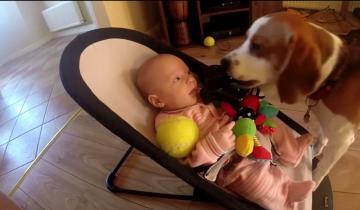 Собака забрала игрушку у ребенка. То, что произошло дальше, вас изумит!