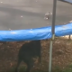 Смышленая собака охраняет батут от голубей