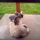 Козлята обожают играть с собакой