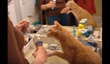 Эта кошка чище многих людей?