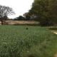Роузи прячется в траве