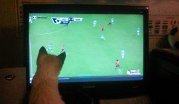 Кот обожает смотреть футбол!