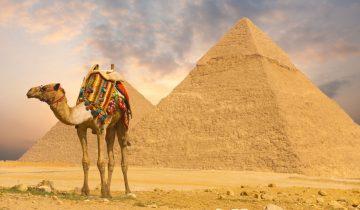 Решил оседлать верблюда. Что из этого вышло?